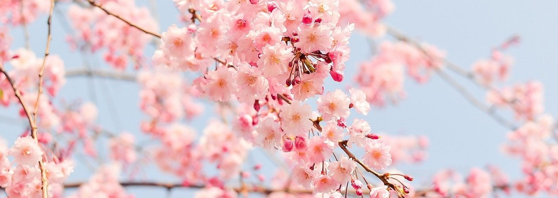 May Bank Holiday Banner